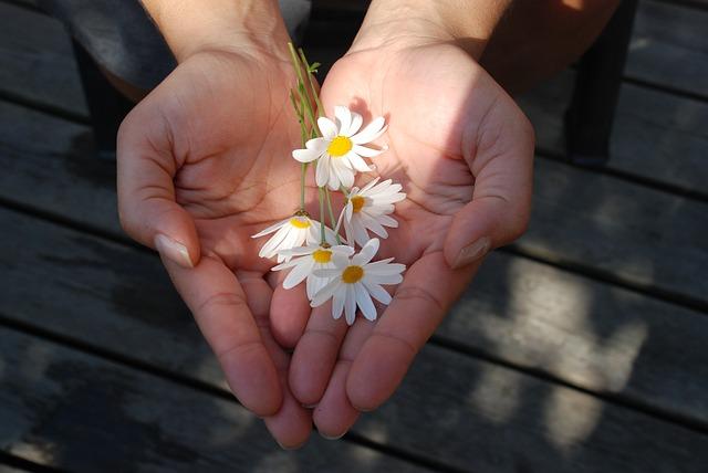 egg donation process: Flower Gift