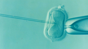 complimentary IVF treatments