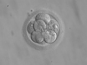 Embryo adoption