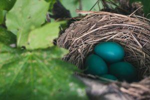 Egg donation faqs
