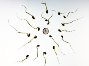 Sperm Quality in men