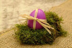 Egg donation awareness